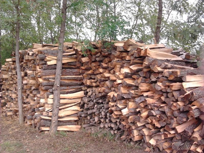 A large pile of wood we chopped