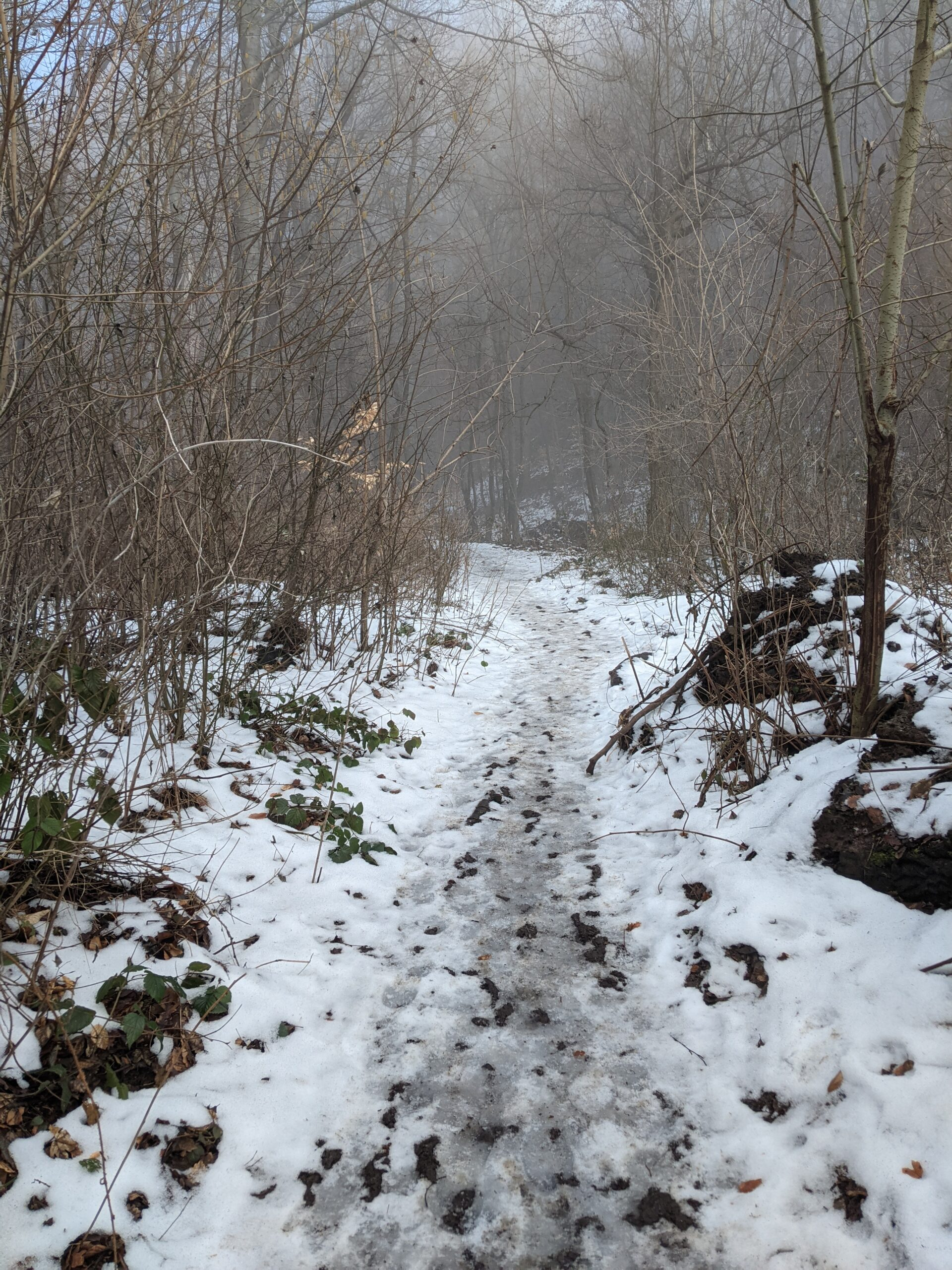 photo of a snowy mountain trail