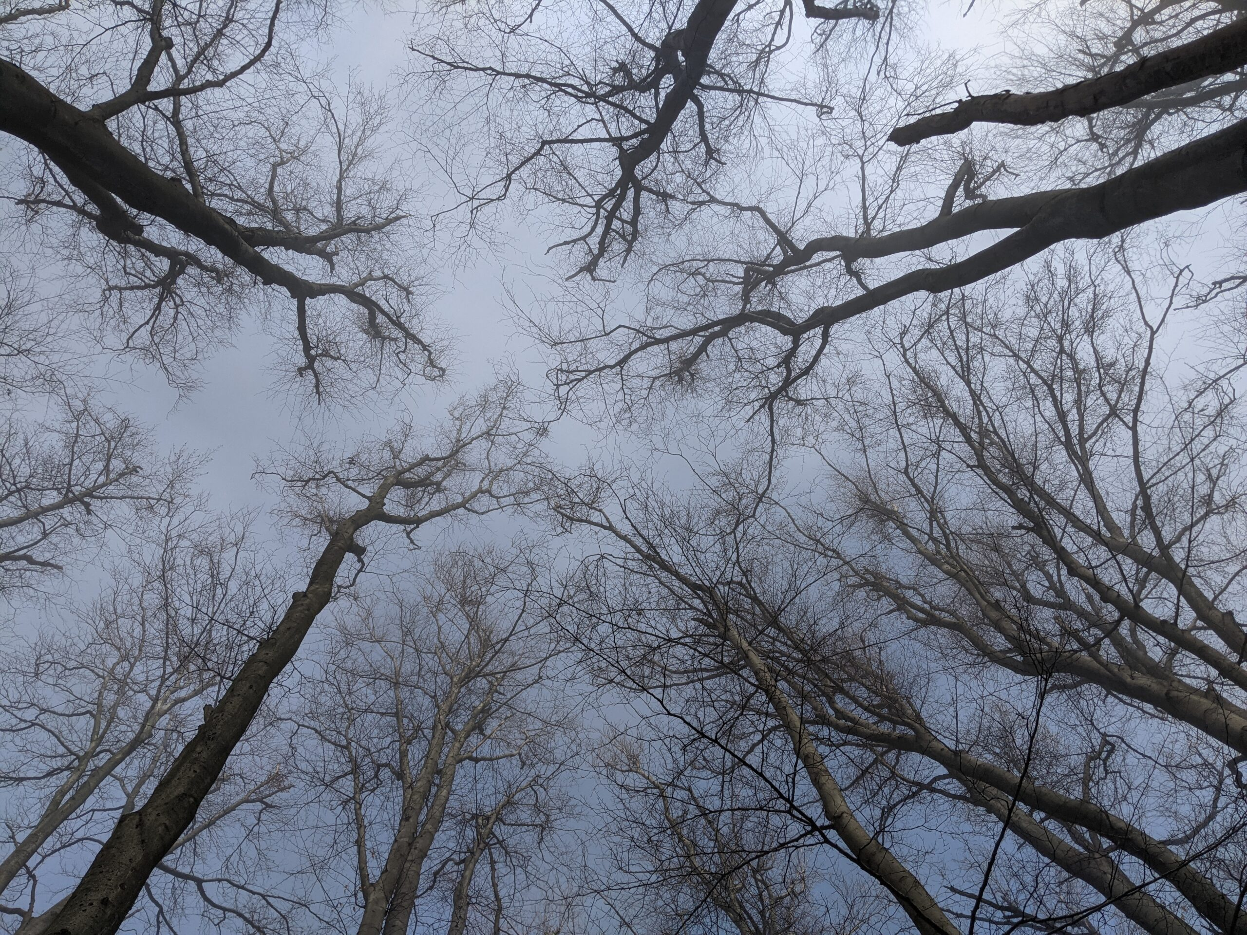 photo of treetops in the fog