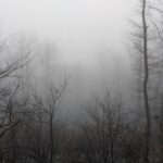 photo of trees in the fog